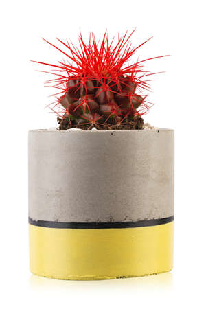 Green cactus with red thorns. Potted plant isolated on white background. 写真素材