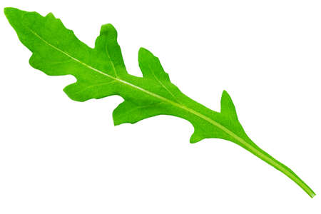 Fresh rucola leaves isolated on white background. Can use for design vegan concept. 写真素材