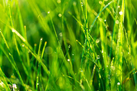 Lawn grass in the sunlight. Stock Photo