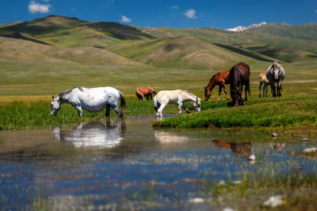 Horse with a foal at a watering hole. Traditional pasture in the mountains of Kyrgyzstan. Mountain Sonkul lake