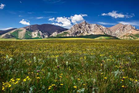 Mountain peaks rise among the flowering fields. District mountainous Songkol Lake. Traditional summer pastures. Kyrgyzstan