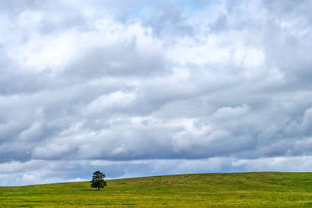 Landscape with a field and a lonely standing pine. Kazakh small hills. Central Asia