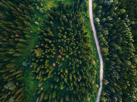 Coniferous forest with a country road. Bird's-eye view Imagens