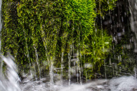 Close-up of moss with streaming trickles of water. Mountain Creek. Summer mood