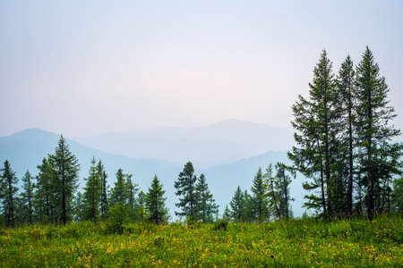 Mountain landscape. Foggy weather high in the mountains in summer