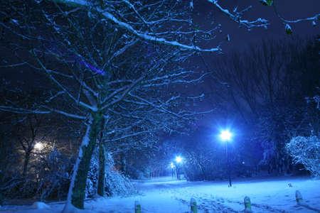 winter night: Winter scene