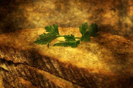 whole wheat: Whole wheat bread grunge concept
