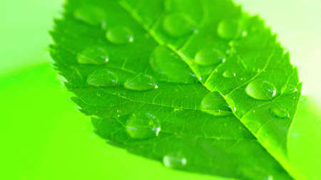 Droplets on green leaf Stock Photo