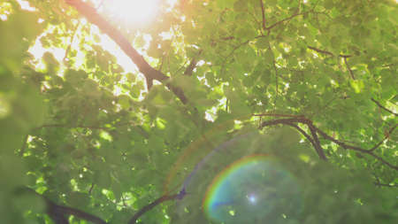 Sun Lens Flare Shining Through Trees