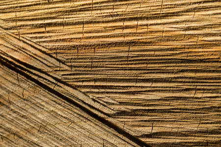 wood panel: the texture of wood logs.Stylish Wooden background.