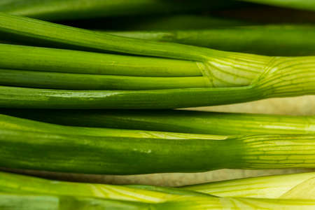 Close up fresh young onion,bunch of fresh shallots,Fresh chives, fresh young onion,green onions feathers heap macro surface texture,Bunches of spring green shallots scallion onions.