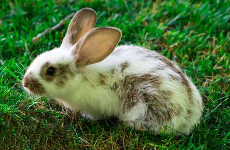 Piccolo coniglio divertente in esecuzione sul campo in estate. Archivio Fotografico