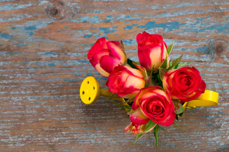 Beautiful flower in watering can on grunge wooden table.With copy space.The top view. Stock Photo