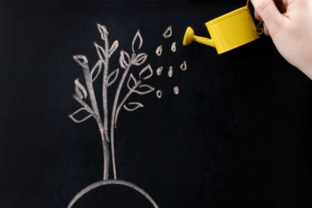Watering can and  tree drawn on a blackboard concept for business investment, savings and making money. Фото со стока