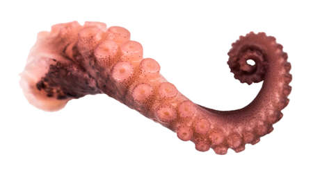 tentacles of octopus isolated on white background. 스톡 콘텐츠