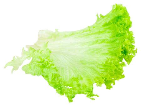 leaf fresh lettuce isolated on white background.