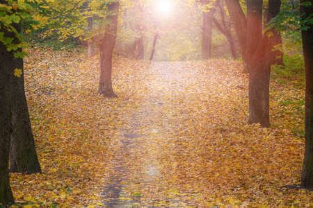 Footpath through Foggy Forest in Autumn illuminated by Sunbeams.