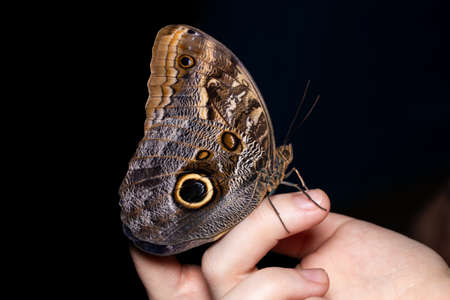 Beautiful butterfly sitting on a woman's finger.