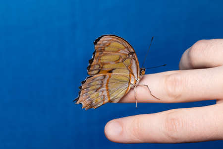 Close up butterfly on woman hand. Beauty of nature. Stockfoto