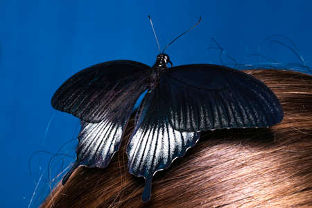 Beautiful woman with a butterfly in her hair.