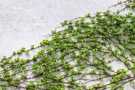Green leaves.Green leaves wall texture. Summer background. 写真素材 - 122683352