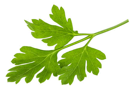 Leaves of fresh parsley  isolated on white