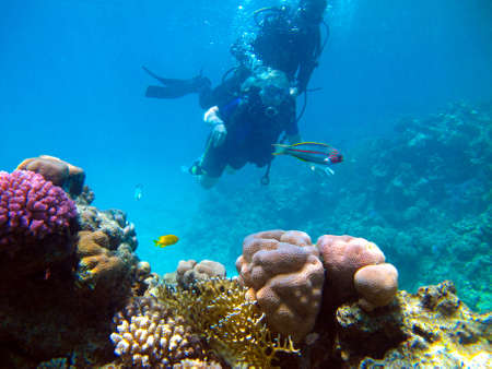 Woman scuba diver and beautiful colorful coral reef underwater.