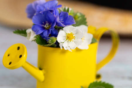 Summer background. Small watering can with a mini bouquet of wild flowers and hat