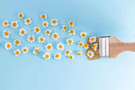 Paint brush drawing with chamomile flowers on a blue background. Fresh flowers instead of paint. Flat lay.