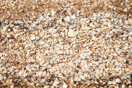beach background texture made of shells. Seashell pattern.