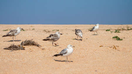 seagulls on the beach near the sea.