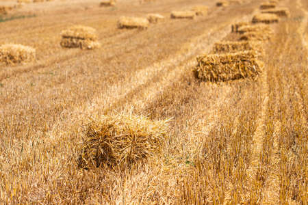 Hay bales on the golden agriculture field. Sunny landscape with straw bales in summer. Yellow wheat haystacks in countryside. Farm concept.