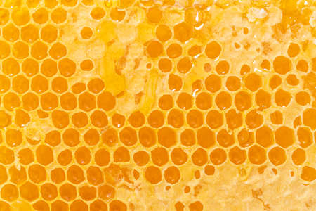Background texture and pattern of a section of wax honeycomb from a bee hive filled with golden honey.