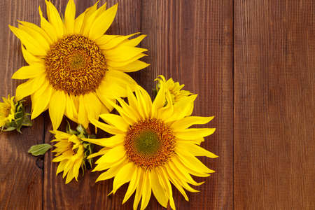 Autumn background with sunflowers on wooden board. Фото со стока