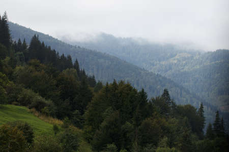 Misty mountain landscape with fir forest and copy space. Фото со стока