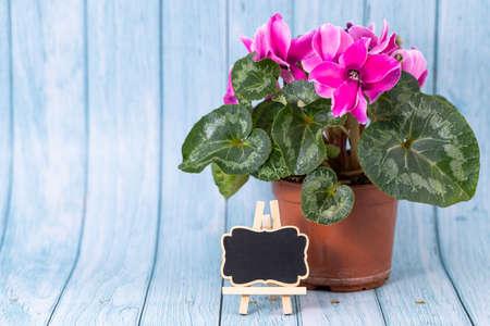 garden flowers on blue wooden background. Spring Garden Works Concept.