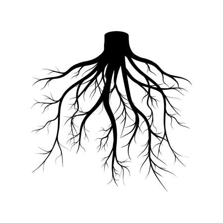 Strong Plant Roots Silhouette against White Background
