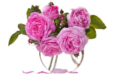 roses in vase: Fresh pink roses in vase isolated over white background Stock Photo