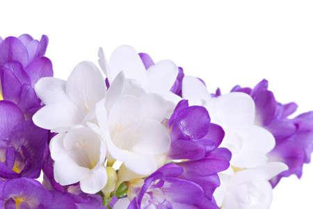 freesia: Fresh fresia flowers isolated over white background