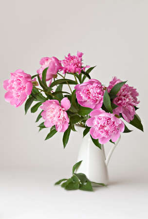 Bouquet of peonies blooms in vase on white background photo