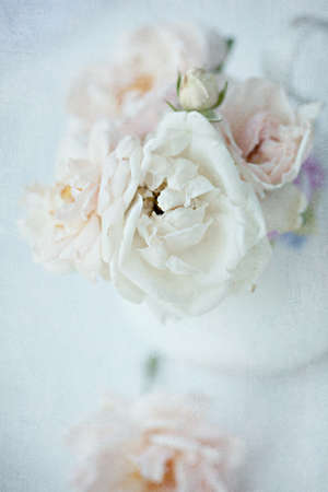 Pink roses in vase. Vintage image. Soft focus photo
