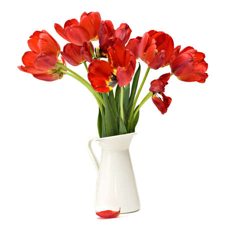cut flowers: Red tulips bouquet isolated over white Stock Photo