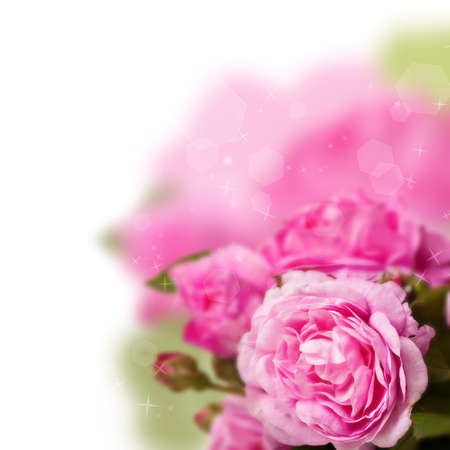 Beautiful pink roses bouquet isolated over white Stock Photo - 18026822