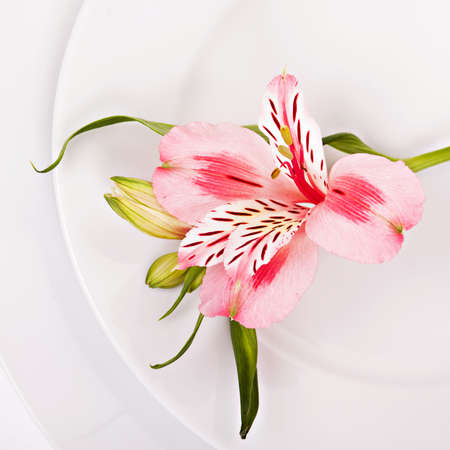 alstromeria: Spring decoration with pink alstromeria of a festive table