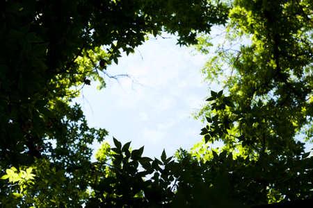 window frame: The sky through the trees