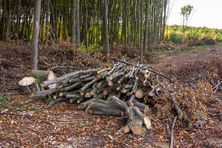 deforestacion: A pile of logs and branches on deforestation Foto de archivo