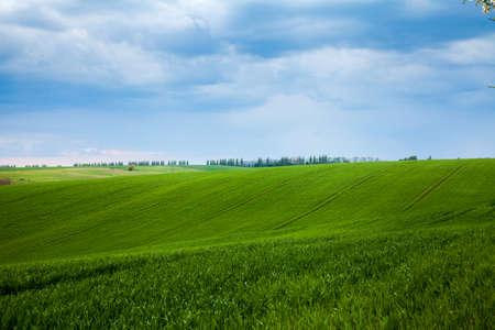 Un champ avec des agricultures de pousses vertes fraîches
