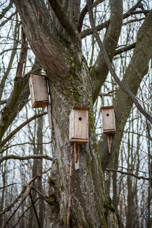 Spring birdhouses in the trees are boxes, usually resembling a house intended for a bird's nest.