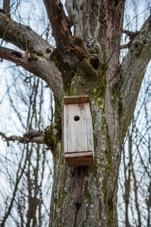 Spring birdhouses in the trees are boxes, usually resembling a house intended for a birds nest. Reklamní fotografie