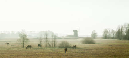 Misty morning with horses and old windmill 写真素材